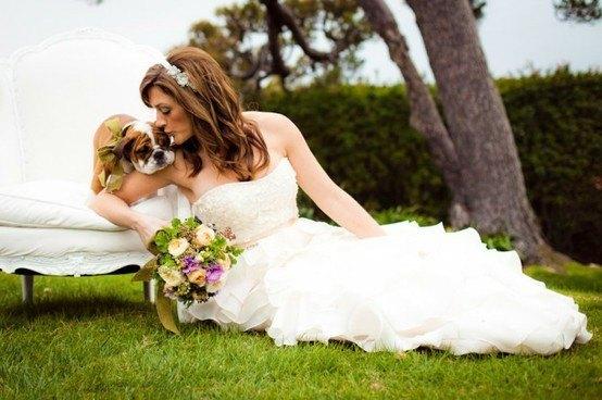 Mascotas en una boda