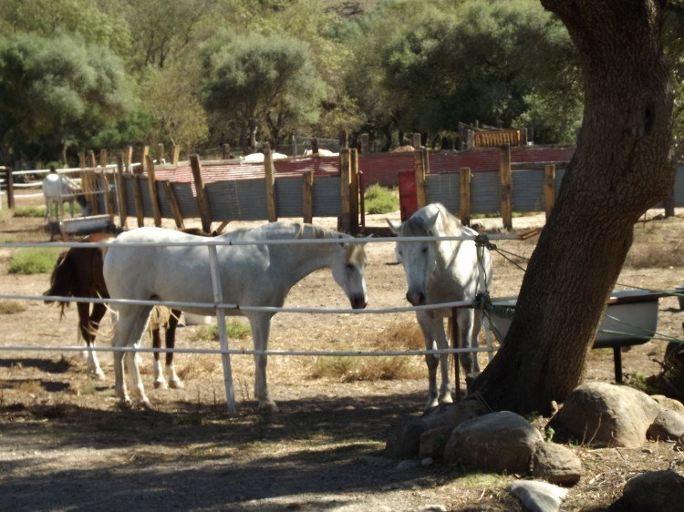 dscf4364 - De Camping en Alcala de los Gazules: Todo un éxito!