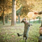 preboda con mascotas 221 - Una Preboda muy Perruna...