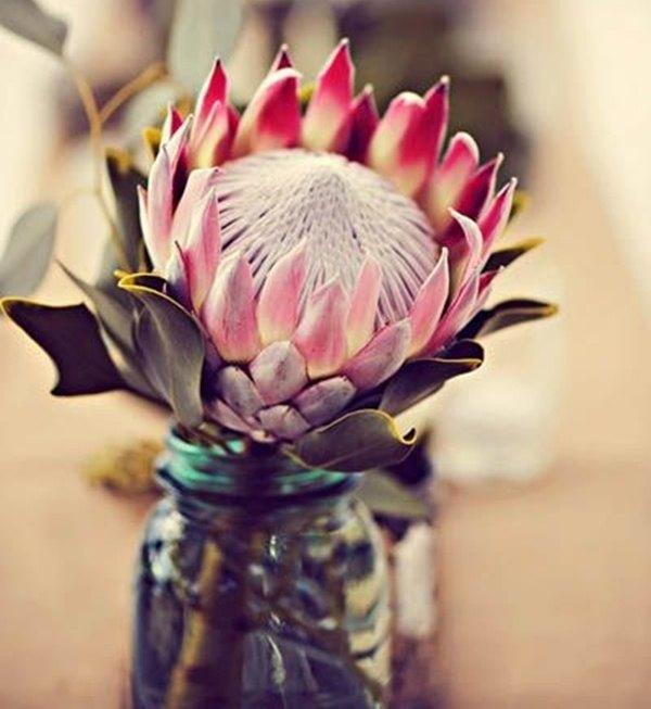 decorar bodas con Protea